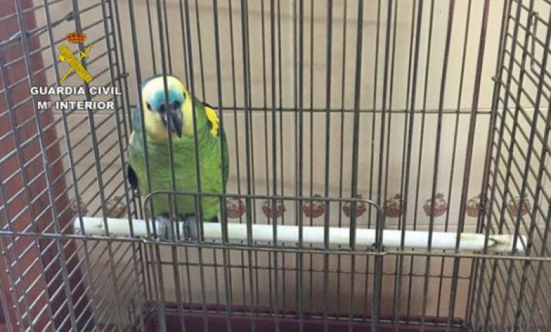<span style='color:#780948'>ARCHIVED</span> - Moroccan parrot thieves detained in El Albujón