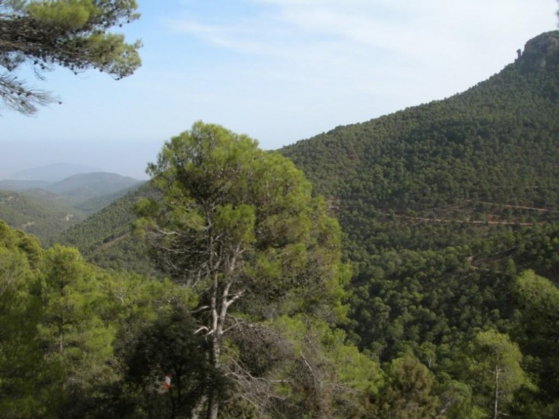 The mountains and regional park of Sierra Espuña in Alhama de Murcia