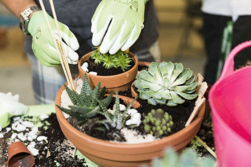 <span style='color:#780948'>ARCHIVED</span> - 17th August, free miniature garden workshops at Leroy Merlin stores in Murcia and Cartagena