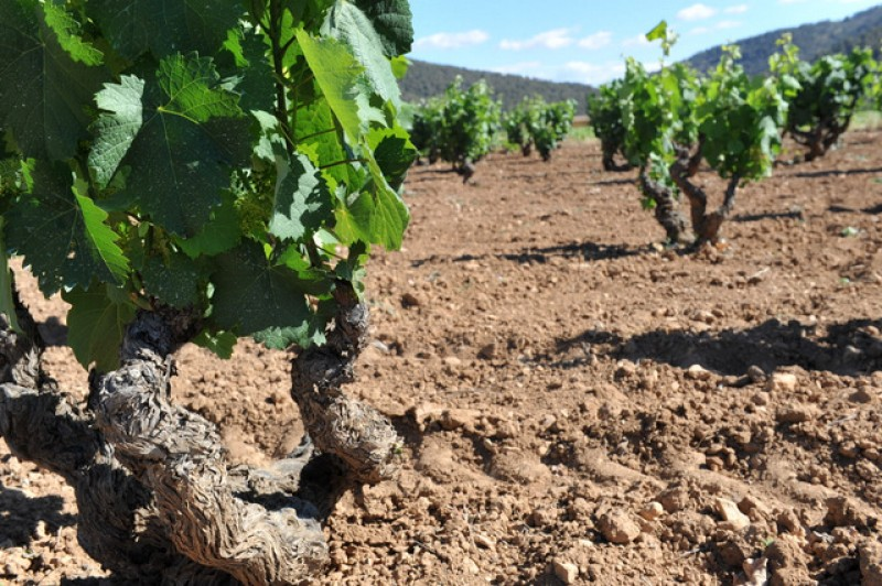 September to December 2019, the Murcia Wine Bus wine tasting day trips to Jumilla, Yecla and Bullas