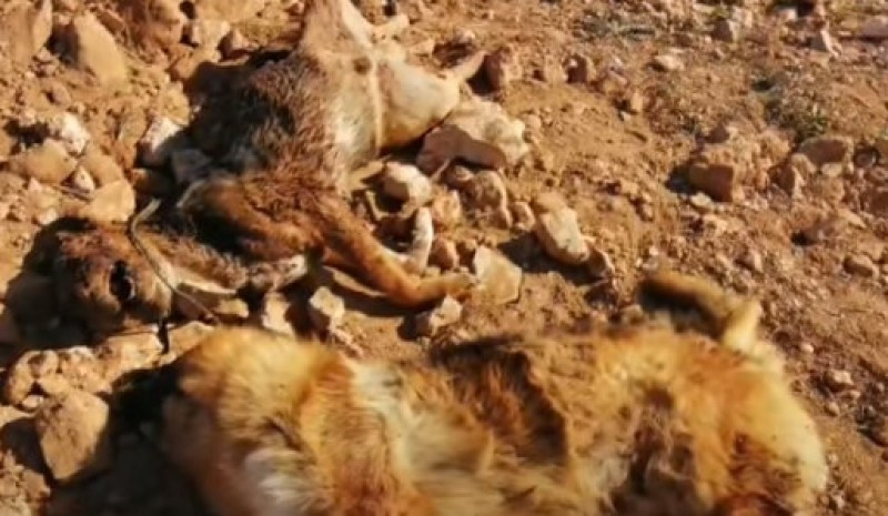 <span style='color:#780948'>ARCHIVED</span> - Animal welfare groups denounce torture of dogs near Murcia