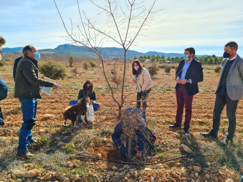 <span style='color:#780948'>ARCHIVED</span> - Experimental cultivation of black truffles in Murcia Region yielding good results