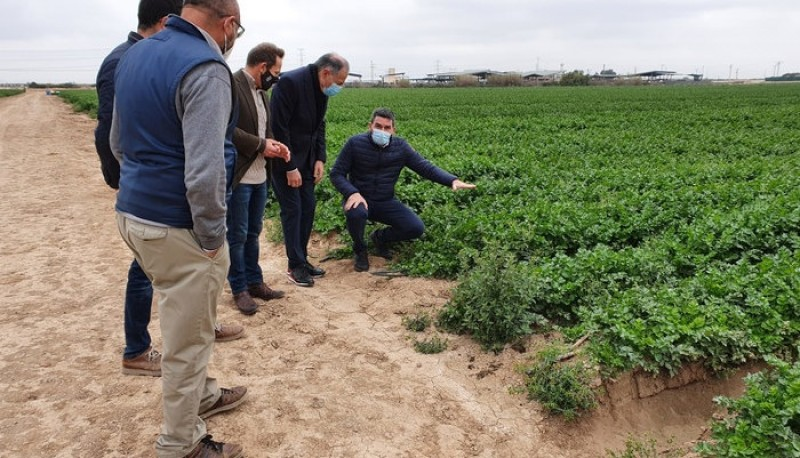<span style='color:#780948'>ARCHIVED</span> - Biofertilizers seek to reduce nitrate run-off and maintain crop viability; Torre Pacheco trials underway