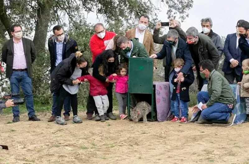<span style='color:#780948'>ARCHIVED</span> - Two Iberian lynx released in Castilla-La Mancha as part of re-introduction programme